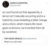 That's a curve ball: HOOD CLEOPATRA  @umcornell  CRe  so i just found out that apparently, a  lemon isn't naturally occurring and is a  hybrid by cross breeding a bitter orange  and a citron, which means life never  gave us lemons, we invented them all  by ourselves  THE HOOD ORACLE @emoblackthot  What's on y'all mind That's a curve ball
