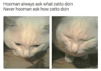 Follow me @antisocialtv @lola_the_ladypug @x__social_butterfly__x @x__antisocial_butterfly__x: Hooman always ask what catto doin  Never hooman ask how catto doin Follow me @antisocialtv @lola_the_ladypug @x__social_butterfly__x @x__antisocial_butterfly__x