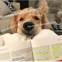 Good boy award goes to this good boy: hooman u havs homwork?  looks borin  How about a scritch scrotch  Can eat the homwork for u  Chaper T  atee of coremon sille rdo  accwining for confounding and e madloctSn in  lybt the  the oen about real workd  i  loan for  y ik feces) and include very pmuall  putienes, nos thone as highly sla  treatmcet effe a  i are  as in most clinical vials  r  pakos (pthups a dozen) without a in  Phase Il trials an no  ferenos in the rate, or ew  r the drug is efficacious and  Randomized versus  Observational Studies?  btwoen done and cthcacy  tinow patienn in in Cher ). Ten  low up very large mun  any bat the largest treat  as are randomized trias is in geocral ox, a  tie iden of cthcasy and survelance. Good boy award goes to this good boy