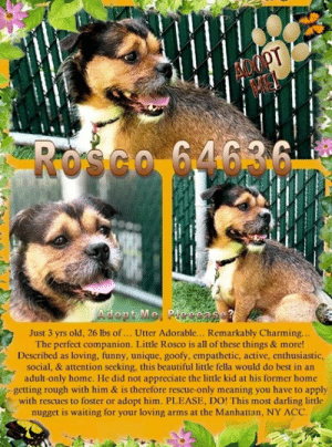 Animals, Beautiful, and Cats: HOOPT  ME  Rośco 64636  Adopt Me Peeeas  Just 3 yrs old, 26 lbs of... . Utter Adorable... Remarkably Charming..  The perfect companion. Little Rosco is all of these things & more!  Described as loving, funny, unique, goofy, empathetic, active, enthusiastic,  social, & attention seeking, this beautiful little fella would do best in an  adult-only home. He did not appreciate the little kid at his former home  getting rough with him & is therefore rescue-only meaning you have to apply  with rescues to foster or adopt him. PLEASE, DO! This most darling little  nugget is waiting for your loving arms at the Manhattan, NY ACC. **FOSTER or ADOPTER NEEDED ASAP** Rosco 64636 ... Just 3 yrs old, 26 lbs of... Utter Adorable... Remarkably Charming... The perfect companion. ✨ Little Rosco is all of these things & more! Described as loving, funny, unique, goofy, empathetic, active, enthusiastic, social, & attention seeking, (did we mention CAT-friendly? 🐱) this beautiful little fella would do best in an adult-only home. He did not appreciate the little kid at his former home getting rough with him & is therefore rescue-only meaning you have to apply with rescues to foster or adopt him. PLEASE, DO! 🙏This most darling little nugget is waiting for your loving arms at the Manhattan, NY ACC.   ✔Pledge✔Tag✔Share✔FOSTER✔ADOPT✔Save a life!  Rosco 64636 Small Mixed Breed Sex male Age 3 yrs (approx.) - 26 lbs  My health has been checked.  My vaccinations are up to date. My worming is up to date.  I have been micro-chipped.   I am waiting for you at the Manhattan, NY ACC. Please, Please, Please, save me!  **************************************** *** TO FOSTER OR ADOPT ***   If you would like to adopt a NYC ACC dog, and can get to the shelter in person to complete the adoption process, you can contact the shelter directly. We have provided the Brooklyn, Staten Island and Manhattan information below. Adoption hours at these facilities is Noon – 8:00 p.m. (6:30 on weekends)  If you CANNOT get to the shelter in person and you want to FOSTER OR ADOPT a NYC ACC Dog, you can PRIVATE MESSAGE our Must Love Dogs - Saving NYC Dogs page for assistance. PLEASE NOTE: You MUST live in NY, NJ, PA, CT, RI, DE, MD, MA, NH, VT, ME or Northern VA. You will need to fill out applications with a New Hope Rescue Partner to foster or adopt a NYC ACC dog. Transport is available if you live within the prescribed range of states.  Shelter contact information: Phone number (212) 788-4000 Email adopt@nycacc.org  Shelter Addresses: Brooklyn Shelter: 2336 Linden Boulevard Brooklyn, NY 11208 Manhattan Shelter: 326 East 110 St. New York, NY 10029 Staten Island Shelter: 3139 Veterans Road West Staten Island, NY 10309 **************************************  NOTE:  WE HAVE NO OTHER INFORMATION THAN WHAT IS LISTED WITH THIS FLYER.DVM Intake Exam  Means of surrender (length of time in previous home): Stray Previously lived with: 7 adults, 10 children (ages 1-14), dogs, and cats (assumably in finders home??) Behavior toward strangers: Playful Behavior toward children: Playful with well-behaved children Behavior toward dogs: Good with the dogs in the home Behavior toward cats: Good with the cats in the home Resource guarding: None reported Bite history: Yes, a small child was attempting to play with Rosco in a rough manner and he first growled and showed teeth before biting. Housetrained: Yes Energy level/descriptors: Rosco is described as loving, funny, unique, goofy, and empathetic.  BEHAVIOR ASSESSMENT Summary:  Leash Walking Strength and pulling: None Reactivity to humans: None Reactivity to dogs: None Leash walking comments: None  Sociability Loose in room (15-20 seconds): Highly social Call over: Approaches readily Sociability comments: Body soft  Handling  Soft handling: Accepts contact Exuberant handling: Accepts contact Comments: Body soft  Arousal Jog: Follows (loose) Arousal comments: None  Knock: No response Knock Comments: None  Toy: No response Toy comments: None  ENERGY LEVEL: Rosco is described as active and enthusiastic. He will need daily mental and physical activity to keep him engaged and exercised. We recommend long-lasting chews, food puzzles, and hide-and-seek games, in additional to physical exercise, to positively direct his energy and enthusiasm. We recommend feeding with puzzle feeders and food-dispensing toys. And we recommend only force-free, reward-based training techniques for Rosco.  Estimated age: 2-4y Microchip noted on Intake?n Observed Behavior - wags tail, seeks petting.  Once on table wagging mostly stopped but allows full exam. Evidence of Cruelty seen -n Evidence of Trauma seen -n Objective  T = P =60 R =wnl BCS 5/9 EENT: Eyes clear, ears clean, no nasal or ocular discharge noted Oral Exam:clean teeth, underbite noted (maxillary brachygnathy) PLN: No enlargements noted H/L: NSR, NMA, Lungs clear, eupnic ABD: Non painful, no masses palpated U/G:2 testes MSI: Ambulatory x 4, skin free of parasites, no masses noted, healthy hair coat CNS: Mentation appropriate - no signs of neurologic abnormalities Assessment: healthy Plan: neuter SURGERY: Okay for surgery  BEHAVIOR DETERMINATION: NHO Behavior Asilomar TM - Treatable-Manageable Recommendations: No children (under 13)/Place with a New Hope partner. Recommendations comments: No children: Due to Rosco's history, we recommend an adult-only home for Rosco. Place with a New Hope partner: Rosco indicates a high level of stress around children at times. This behavior will require careful environmental management and likely significant lifestyle adaptations to prevent injury to his future humans and to increase Rosco's quality of life. We highly recommend consultation with a veterinary behaviorist and/or highly qualified behavior modification trainer. Potential challenges: Fearful/potential for defensive aggression/risk of future aggression. Potential challenges comments: Fearful/potential for defensive aggression: Due to Rosco's multiple bite history, it suggests that he has the potential for defensive aggression when he feels uncomfortable. Please see handout on Fearful/potential for defensive aggression.   ************************************** RE: ACC site Just because a dog is not on the ACC site does NOT necessarily mean safe. There are many reasons for this like a hold or an eval has not been conducted yet or the dog is rescue-only... the list goes on... Please, do share & apply to foster/adopt these pups as well until their thread is updated with their most current status. TY! ****************************************** About Must Love Dogs - Saving NYC Dogs: We are a group of advocates (NOT a shelter NOR a rescue group) dedicated to finding loving homes for NYC dogs in desperate need. ALL the dogs on our site need Rescue, Fosters, or Adopters & that ASAP as they are in NYC high-kill shelters. If you cannot foster or adopt, please share them far & wide. Thank you for caring!! <3 ****************************************** RESCUES: * Indicates New Hope Rescue partner is accepting applications for fosters and/or adopters. http://www.nycacc.org/get-involved/new-hope/nhpartners ****************************************** https://www.nycacc.org/adopt/rosco-64636 ++++ https://nycaccpets.shelterbuddy.com/animal/animalDetails.asp?task=search&advanced=1&rspca%5Fid=64636&animalType=1%2C2%2C15%2C3%2C16%2C15%2C16%2C86%2C79&datelostfoundmonth=3&datelostfoundday=22&datelostfoundyear=2019&find%2Dsubmitbtn=Find+Animals&tpage=1&searchType=2&animalid=98696 ++++ Beamer Maximillian Caro Hocker Carolin Hocker Michelle Neufeld Montak Suzanne Dixie