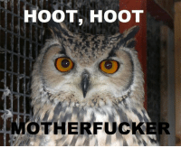 motherfucker: HOOT, HOOT  MOTHERFUCKER