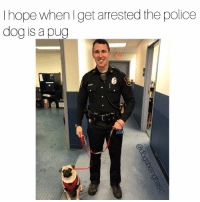 """Cutest arrest ever, """"Police dog sniffed and coughed all over suspect, proceeded to lick and spin in circles"""" Via-Rochester, NH police dept.: hope when get arrested the police  dog is a pug Cutest arrest ever, """"Police dog sniffed and coughed all over suspect, proceeded to lick and spin in circles"""" Via-Rochester, NH police dept."""