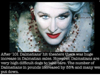 Awww ~Matt: horror addic  After '1O1 Dalmatians' hit theaters thegewas huge  increase in Dalmatian sales. However, Dalmatians are  very high difficult dogs to takecáre. The number of  Dalmatians in pounds ifereased by 35% and many wei  put down Awww ~Matt
