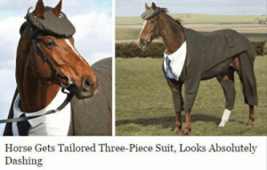 three piece suit: Horse Gets Tailored Three-Piece Suit, Looks Absolutely  Dashing