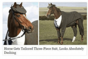 Here's an absolutely dashing horse in a suit :): Horse Gets Tailored Three-Piece Suit, Looks Absolutely  Dashing Here's an absolutely dashing horse in a suit :)