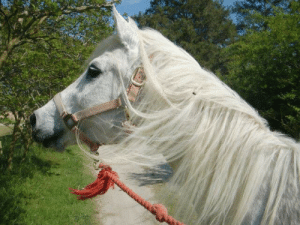 horse-images:  Lost one of my oldest friends. This morning we had to say goodbye to Misty, our Egyptian Arabian. She was 37 years old and the most amazing horse a girl could ask for.: horse-images:  Lost one of my oldest friends. This morning we had to say goodbye to Misty, our Egyptian Arabian. She was 37 years old and the most amazing horse a girl could ask for.
