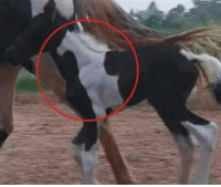 Horse, In A, and A Horse: Horse in a horse