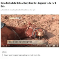 <h2>Mi espíritu animal.</h2><p>El caballo que se hace el muerto siempre que tiene que galopar un rato.</p>: Horse Pretends To Be Dead Every Time He's Supposed To Go For A  Ride  Horseaholic Funny, Funny Horse Stuff, Horse Behavior, Video 9  죽은 척하는 명를 연기 진강이  사람들이 많이 있으면 눈치보고 안 일어나요  145/335  atane:  Never have I related to an animal so much in my life. <h2>Mi espíritu animal.</h2><p>El caballo que se hace el muerto siempre que tiene que galopar un rato.</p>