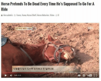 "Funny, Memes, and Horse: Horse Pretends To Be Dead Every Time He's Supposed To Go For A  Ride  Horse aholic  Funny, Funny Horse Stuff. Horse Behavior. Video P9  , 죽은 척하는 명품연기 진강이  사람들이 많이 있으면 눈치보고 안 일어나요  D 1:45/315 friend: ""hey you wanna hang out?"" https://t.co/PpipfotxPi"