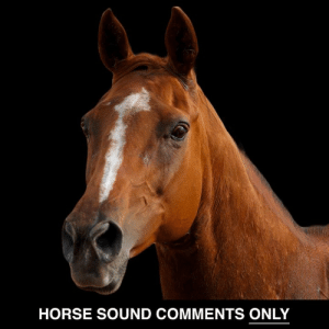 Dank, Horse, and 🤖: HORSE SOUND COMMENTS ONLY All others will be removed.