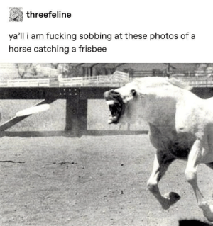 Horses can catch frisbees by R41N4 MORE MEMES: Horses can catch frisbees by R41N4 MORE MEMES