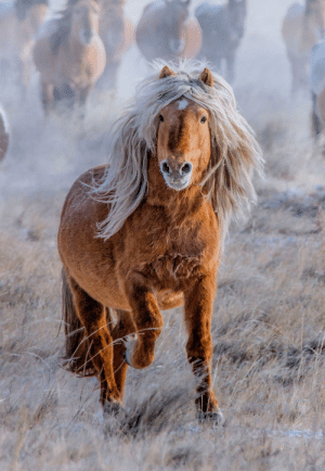 Horses can live up to 25-30 years but the oldest living horse lived up to 56 years!!: Horses can live up to 25-30 years but the oldest living horse lived up to 56 years!!