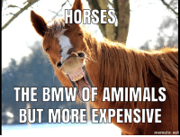 goodbye horses: HORSES  THE BMWNOF AMIMALS  BUT MORE EXPENSIVE  mematic.net