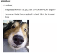 "<p>So Happy it Hurts via /r/wholesomememes <a href=""https://ift.tt/2kV5cWU"">https://ift.tt/2kV5cWU</a></p>: hosts  ghostsfacer:  just got back from the vet. you guys know what my dumb dog did?  he sprained his tail. from wagging it too hard. this is the stupidest  thing. <p>So Happy it Hurts via /r/wholesomememes <a href=""https://ift.tt/2kV5cWU"">https://ift.tt/2kV5cWU</a></p>"
