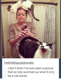 Memes, A Picture, and 🤖: hotbritishquyspluscats:  I don't think I've ever seen a picture  that so fully summed up what it is to  be a cat owner. same