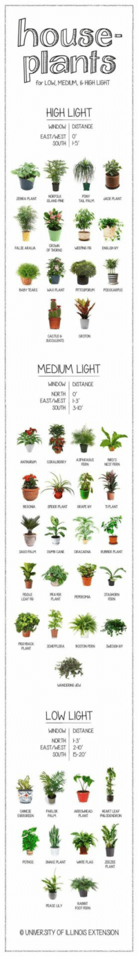 Boston, Heart, and House: house  plants  for LOW, MEDIUM, HIGH LIGHT  HIGH LIGHT  WINDOW I DSTANCE  EAST/WEST 0  SOUTH H5  EBRA PLANT  ISLAND FINE  PONY  TAL PALM UADEFLANT  FALJE ARALIA  OF THORNS  BABY TEARS WAX PLANT TOSPORLM ODOCARPUS  MEDIUM LIGHT  WINDOW I DISTANCE  NORTH  EAST/WEST  1-3.  SOUTH 3-10  ANTHURLM CORABERRY ASPARASUS  ERN  NEST FERN  MHPLANT  GRA氏NY  TPLANT  SAGO PALM DUMBCANE DRACAENA KUBBER PLANT  PRAVER  PLANT FEPEROMA STAGHORN  LEAF RG  FERN  SOHEFFLERA BOSTON FERN  PLANT  LOW LIGHT  WINDOWDISTANCE  NORTH H3  EAST/WEST |  2-10,  SOUTH 5-20  PARLOR  PALM  ARROWHEAD HEART LEA  PLANT  POTHOS SNAKE PLANT  RABEIT  FOOT FERN  PEACE LLY  O UNIVERSITY OF ILLINOIS EXTENSION