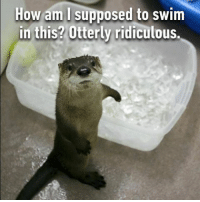 I think he has no otter option. Follow @9gag 9gag otter: How am I supposed to swim  in this? erly ridiculous I think he has no otter option. Follow @9gag 9gag otter