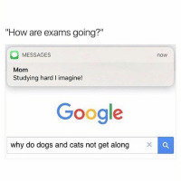 """Cats, Dogs, and Google: """"How are exams going?""""  MESSAGES  now  Mom  Studying hard I imagine!  Google  why do dogs and cats not get along X C Yeah mom... studying hard... 😂"""
