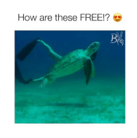 Friends, Memes, and Free: How are these FREE!? Grab Your Free Bracelets with Link in @mybuenavida Bio 😍 Pigs Sold Separately, Tag Friends 💕💝