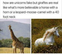 Fake, Horse, and Believable: how are unicorns fake but giraffes are real  like what's more believable a horse with a  horn or a leopard-moose-camel with a 40  foot neck Meirl