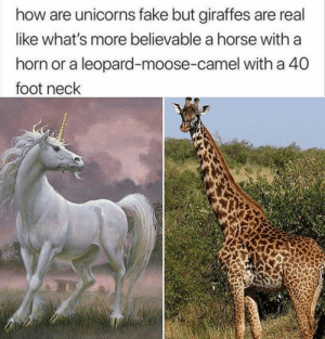 Fake, Horse, and Believable: how are unicorns fake but giraffes are real  like what's more believable a horse with a  horn or a leopard-moose-camel with a 40  foot neck No le falta razón…
