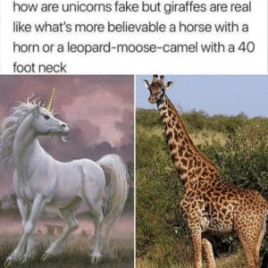 Fake, Horse, and Believable: how are unicorns fake but giraffes are real  like what's more believable a horse witha  horn or a leopard-moose-camel with a 40  foot neck meirl