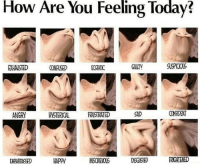 ecstatic: How  Are You  Feeling  Today?  EXHAISTED  CONFUSED  ECSTATIC  GUILTY  SUSPICIOUS  ANGRY  HYSTERICAL FRUSTRATED  SAD  CONFIDENT  EMBARRASSED  HAPPY  NSCHIEOUS
