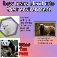 Facts, Love, and Bear: how bears blend into  their environment  this boy  looks just  like the ice  it lives on.  good job  polar bear!  he looks just  like the dirt and  mud! good job i love learning new facts! https://t.co/ZqWamURjV4