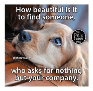 Beautiful, Memes, and Asks: How beautiful is it  to find someone,  Shake  Paws  Com  shakepaws.com  who asks for nothing  but your company. ❤️❤️❤️