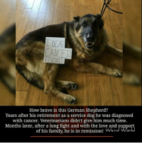 Dogs, Family, and Love: How brave is this German Shepherd?  Years after his retirement as a service dog he was diagnosed  with cancer. Veterinarians didn't give him much time.  Months later, after a long fight and with the love and support  of his family, he is in remission! Weir World