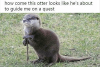 Quest, How, and Otter: how come this otter looks like he's about  to guide me on a quest Before you go, here's a