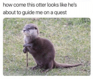 Funny, Quest, and How: how come this otter looks like he's  about to guide me on a quest Take me with you!