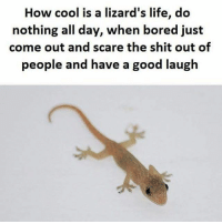 meme funny jokes money crazy ChammerMeme laugh lol lmao smh dank nochill hood viral bitch dog savage basicbitch cat humor picture: How cool is a lizard's life, do  nothing all day, when bored just  come out and scare the shit out of  people and have a good laugh meme funny jokes money crazy ChammerMeme laugh lol lmao smh dank nochill hood viral bitch dog savage basicbitch cat humor picture