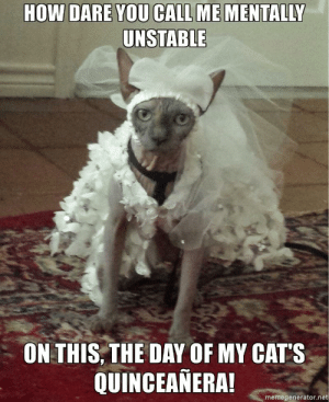 Cats, Quinceanera, and How: HOW DARE YOU CALL ME MENTALLY  UNSTABLE  ON THIS,THE DAY OF MY CAT'S  QUINCEANERA  memegenerator.net You mess with my cats, you mess with me. (i.redd.it)