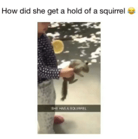 Memes, Twitter, and Squirrel: How did she get a hold of a squirrel  SHE HAS A SQUIRREL she has a squirrel 😂 👉🏻(@bestvines bestvines) Credit: notyarelinureno (Twitter)