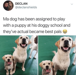 How do I get the assignment to become best pals with a puppy?! via: @declanshields: How do I get the assignment to become best pals with a puppy?! via: @declanshields