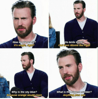 Memes, Winnie the Pooh, and Birds: How do planes  Wy?  It's magic  fight?  Why is the sky blue?  Because orange would clash  Do birds think  from Winnie the Pooh  What is the biggest number?  Anything plus one I like that last answer repost chrisevans