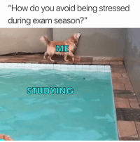 "How, You, and Do You: ""How do you avoid being stressed  during exam season?""  ME  STUDYING 🤣"