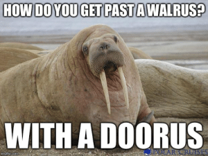 The Worst, World, and How: HOW DO YOU GET PAST A WALRUS?  WITH A DOORUS  POLAR CRUESE  imgflip.com Probably the worst pun in the entire world - Imgflip