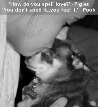 """Memes, 🤖, and Piglet: How do you spell love?"""" Piglet  'You don't spell it...you feel it.  Pooh"""