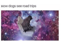 Dogs, How, and Fun: How dogs see road trips <p>Wish they were as fun for humans</p>