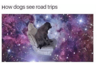 Dogs, Memes, and 🤖: How dogs see road trips https://t.co/IHGQo0yG2r