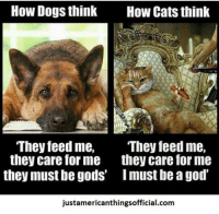 feed me: How Dogs think  How Cats think  They feed me,  They feed me,  they care for me they care for me  they must be gods' Imust be a god'  justamericanthingsofficial.com