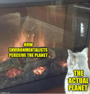 Introvert cat versus the reflection: HOW  ENVIRONMENTALISTS  PERCEIVE THE PLANET  THE  ACTUAL  PLANET  imgflip.com Introvert cat versus the reflection