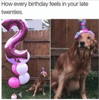 Anaconda, Birthday, and Dogs: How every birthday feels in your late  twenties. I just turned 100!! @dogsbeingbasic has the best dogs memes