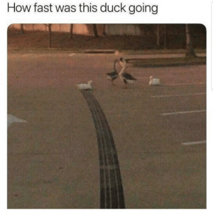 Funny Stolen Memes and Such: How fast was this duck going Funny Stolen Memes and Such