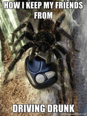These memes are for those who have bizarre pets that no one else understands. #Memes #Animals #Snake #Spider #WTF: HOW I KEEP MY FRIENDS  FROM  LOCK  LOCK  memegenerator.net  DRIVING DRUNK These memes are for those who have bizarre pets that no one else understands. #Memes #Animals #Snake #Spider #WTF