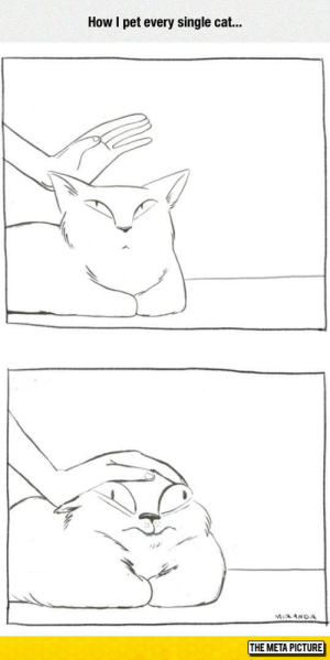 Tumblr, Blog, and Single: How I pet every single cat...  THE META PICTURE awesomesthesia:  Maybe That's Why They Don't Like Me