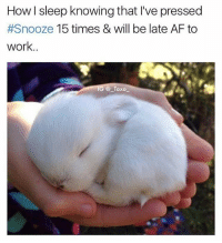 @_taxo_ is quite the go-getter 😂👌 @_taxo_ . . . . . snooze snoozefest snoozetime snoozebutton lateforwork late haha sotrue omg me meaf bunny bunnyboy bunnyinsta bunniesofig girls insta instadaily planneraddict rabbit love friends follow f4f viral amazing: How I sleep knowing that I've pressed  #Snooze 15 times & will be late AF to  work..  G @Taxo @_taxo_ is quite the go-getter 😂👌 @_taxo_ . . . . . snooze snoozefest snoozetime snoozebutton lateforwork late haha sotrue omg me meaf bunny bunnyboy bunnyinsta bunniesofig girls insta instadaily planneraddict rabbit love friends follow f4f viral amazing