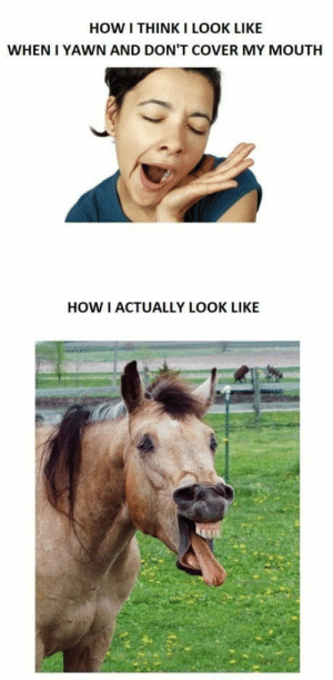 How, Think, and Yawn: HOW I THINK I LOOK LIKE  WHEN I YAWN AND DON'T COVER MY MOUTH  HOW I ACTUALLY LOOK LIKE Noooooo